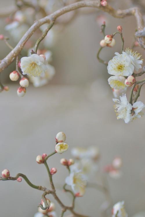 flower 122