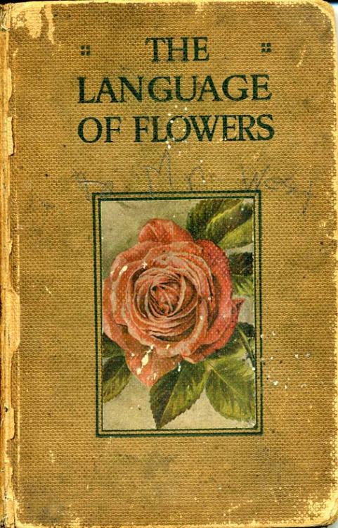 language of flowers 45