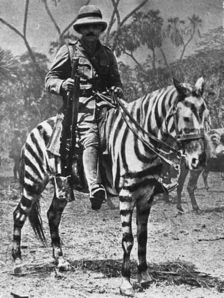 Pony camouflaged as a zebra, East Africa, WWI, 1915