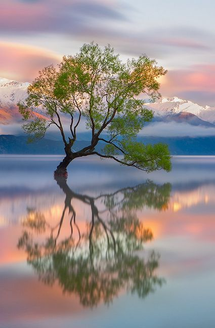 Tree, lake, mountains
