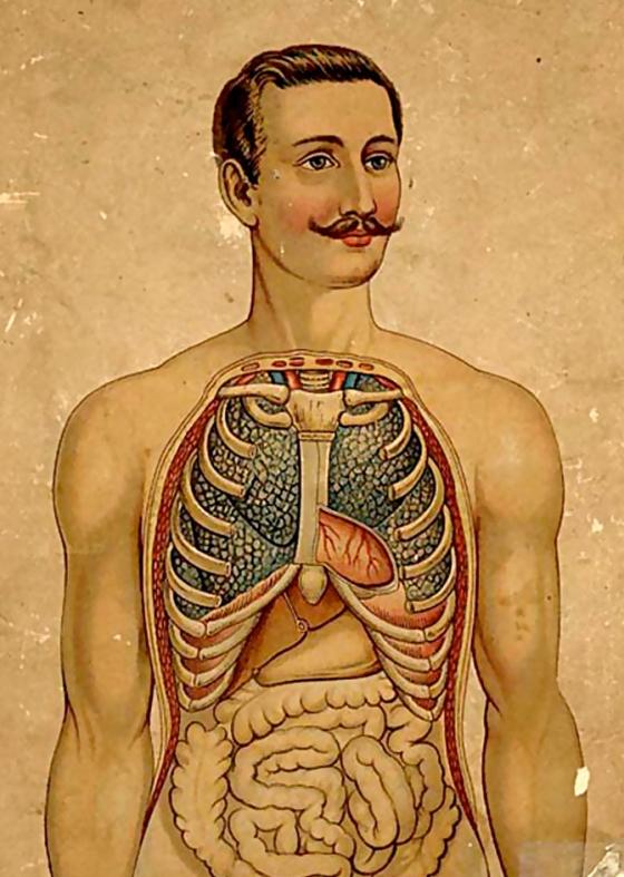 anatomy242