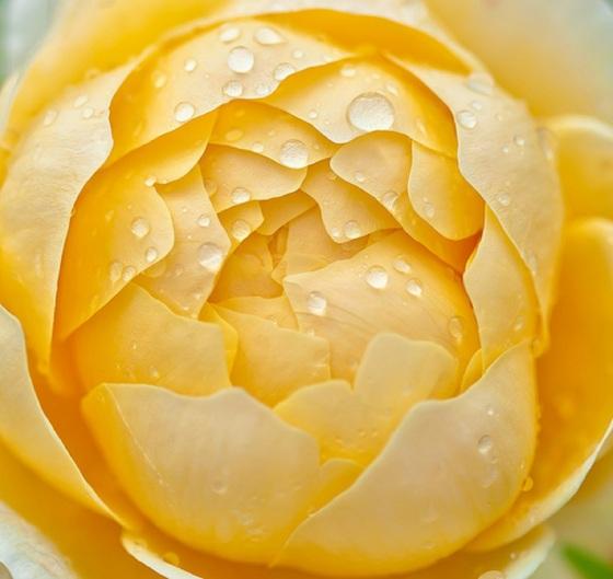 flower-2421