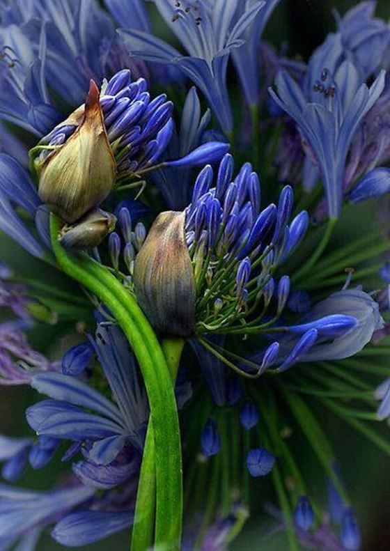 flower-blue-24