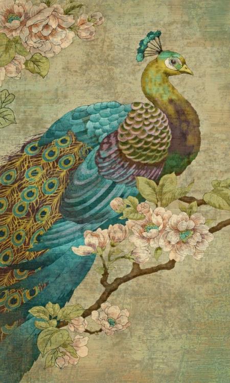 peacock-43