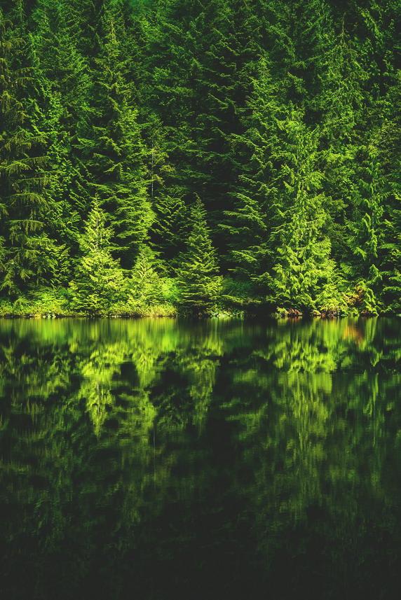 Spruce/Fir