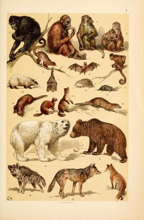 animals-144