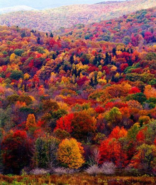 autumn-81281