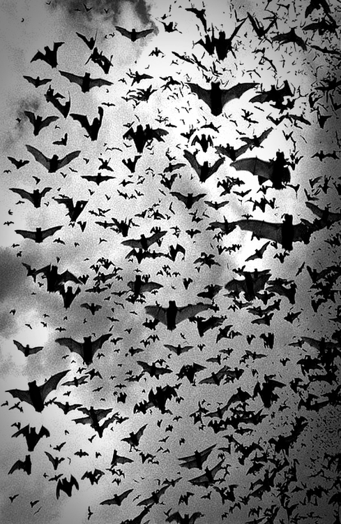 bats-234