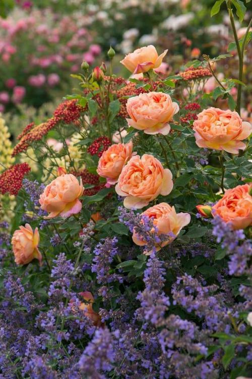flowers-77500