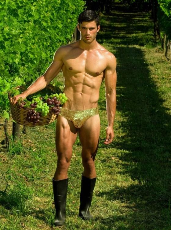 grape-harvest