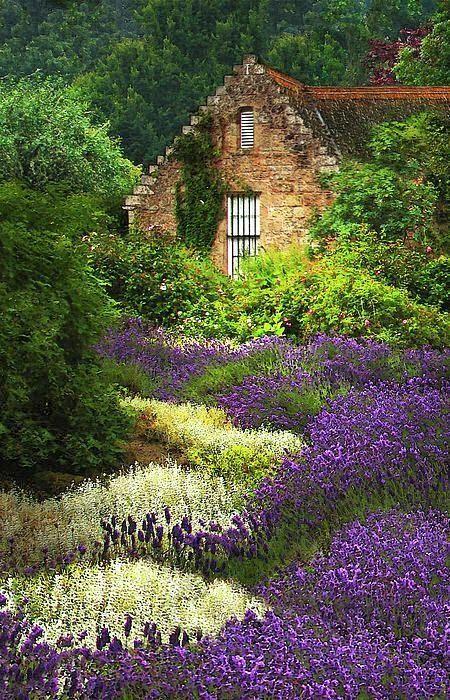 lavender-landscape-4