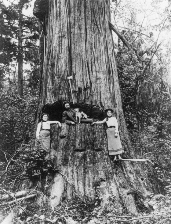 lumberjack-1027