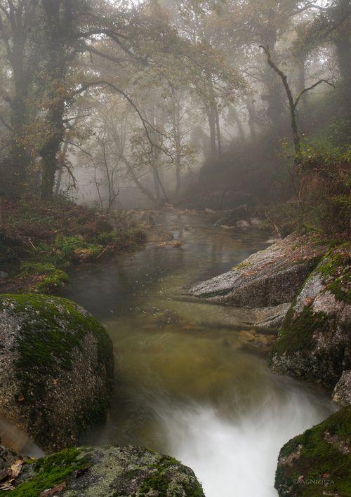 misty-stream-234