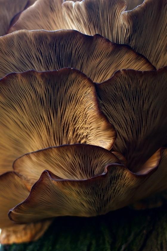 mushroom-21280