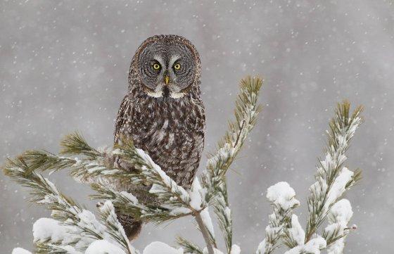 owl-3241280