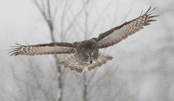 owl-3241282