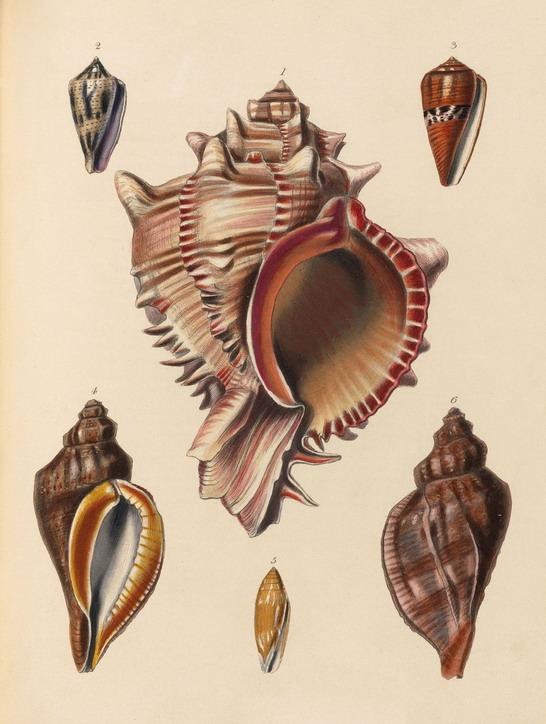shells-232