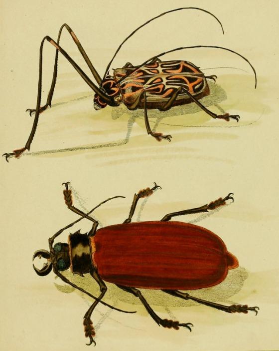 beetle-81280