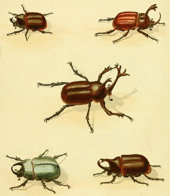 beetle-81281