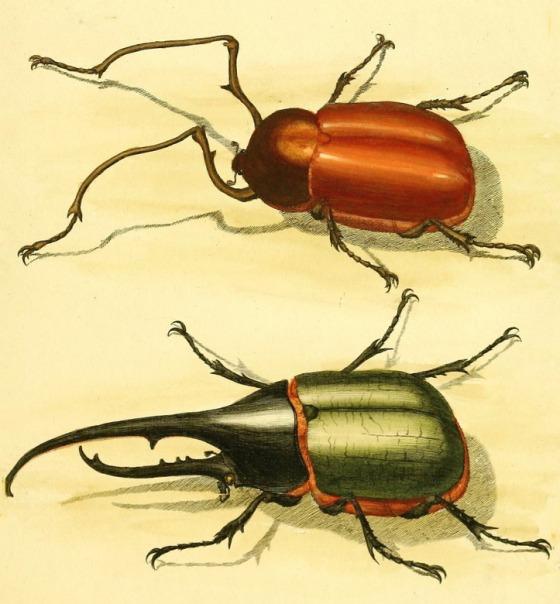 beetle-81282