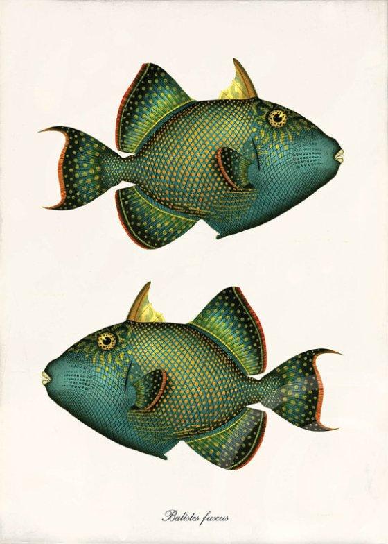 fish-9756