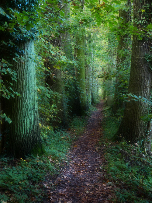 forest-path-141