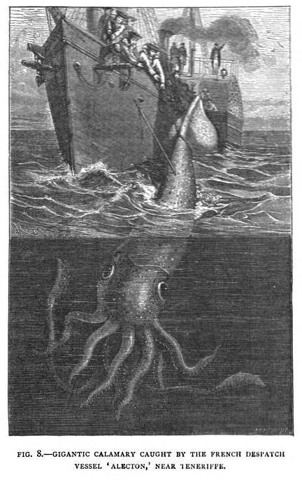 kraken-321