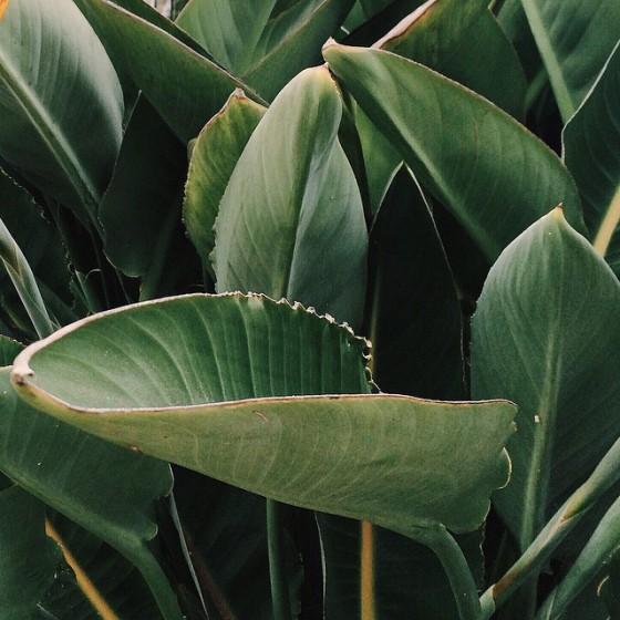 leaves-1280