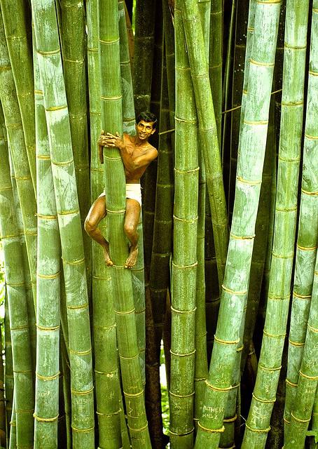 sri-lanka-bamboo