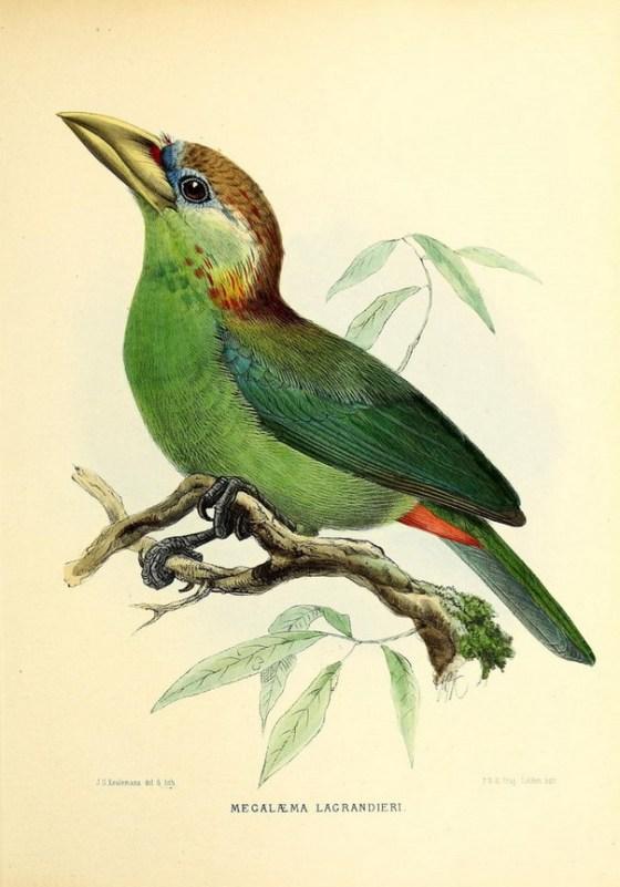 birds-1280
