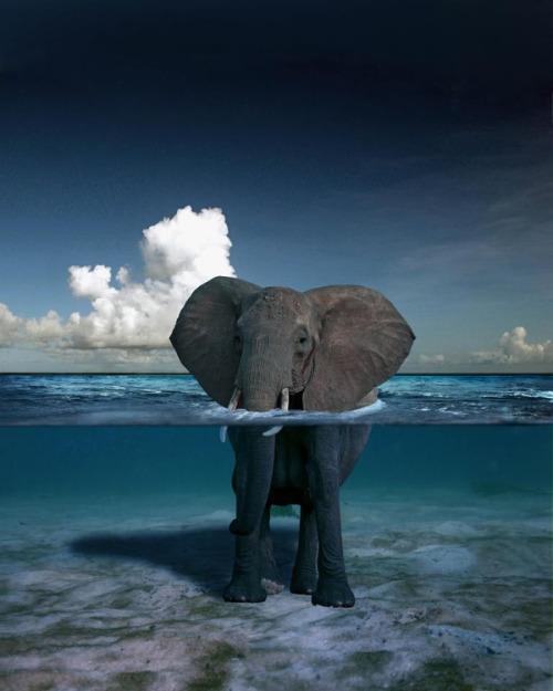 elephant-689