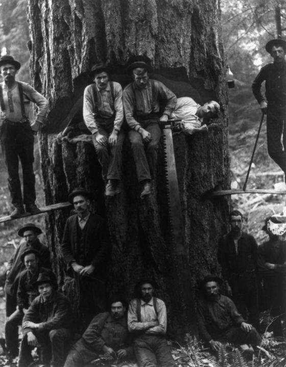 lumberjack-1024
