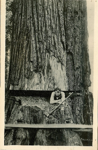 lumberjack-414