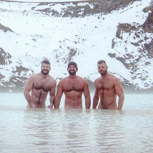 polar-bears-799