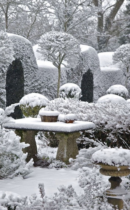 Snow in a topiary garden