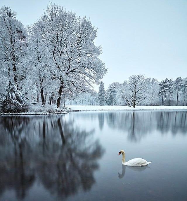 Snow & Swan