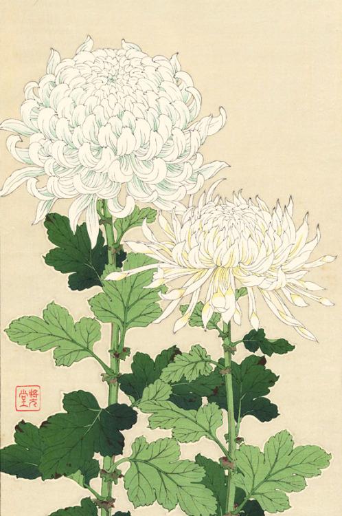 Japanese Art: Chrysantheums by KawarazakiShoudou