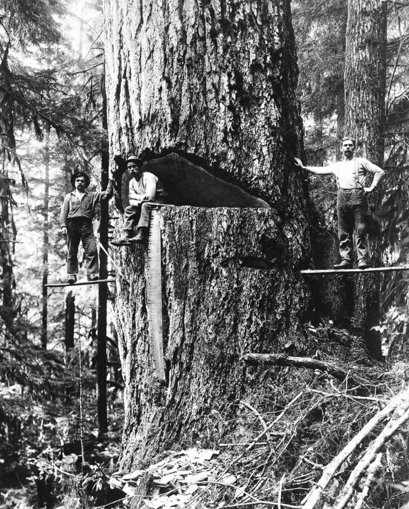 Lumberjacks in Oregon, 1918