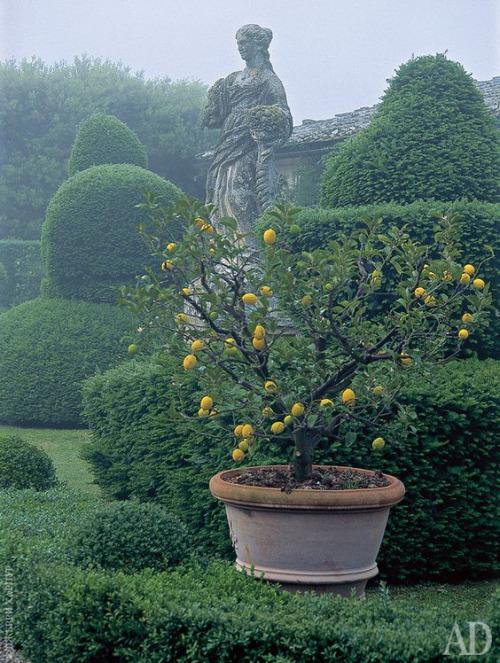 That classic Mediterranean gardenlook
