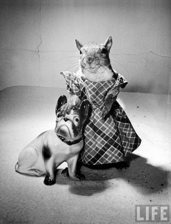 Still life – squirrel in a dress with a porcelain bulldog