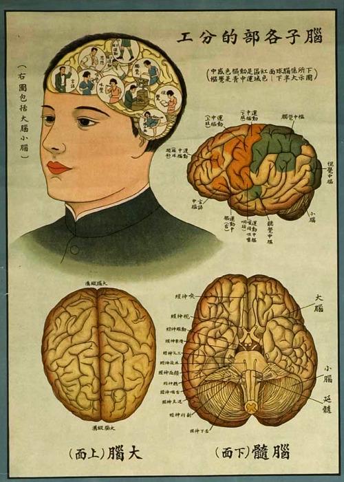 Chinese Brain Chart