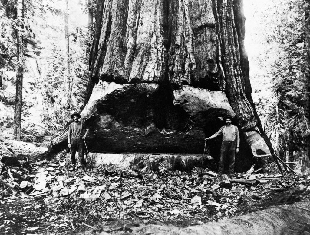 Lumberjacks, California, 1902
