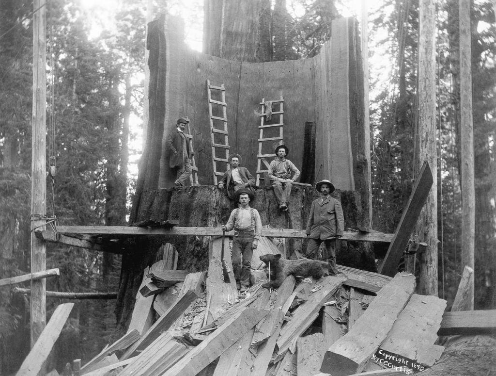 Lumberjacks, California, 1902