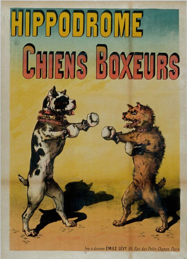 Chiens Boxeurs
