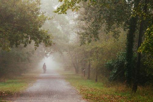 Walking down a mistylane