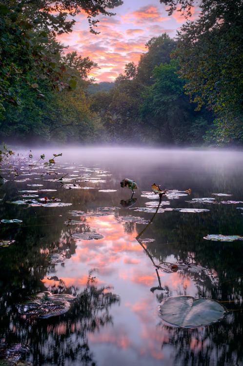 Misty sunrise over a pond, photo by RobertCharity