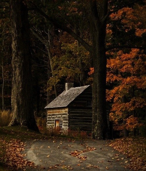 Cabin in thewoods