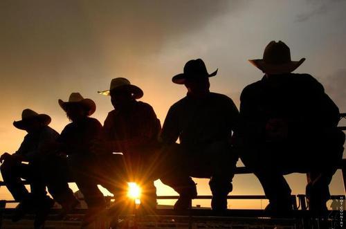 Cowboys, roosting atsunset
