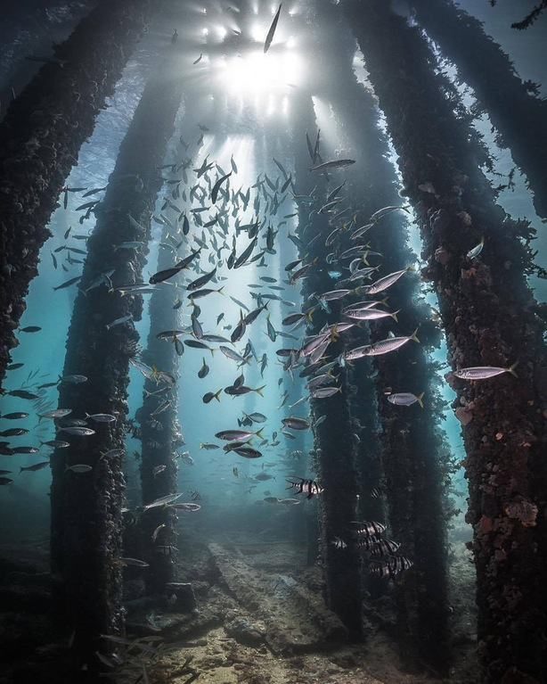 Fish under awharf