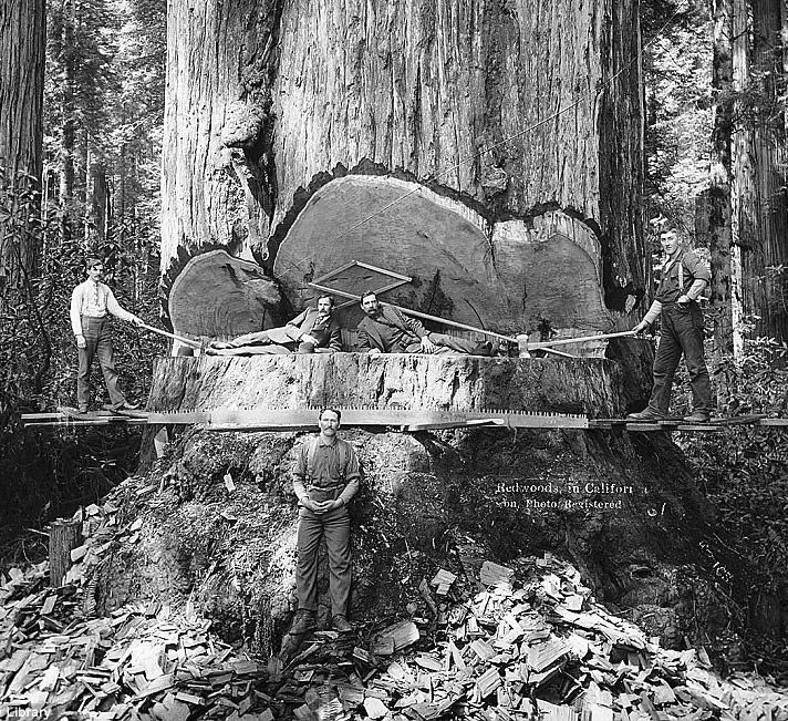 Lumberjacks, California, circa 1905